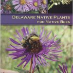 Delaware Native Plants